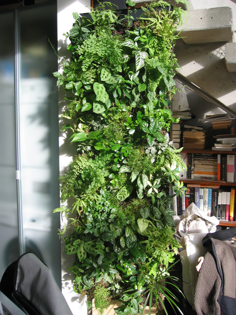 ELT Inc. living wall in private residence